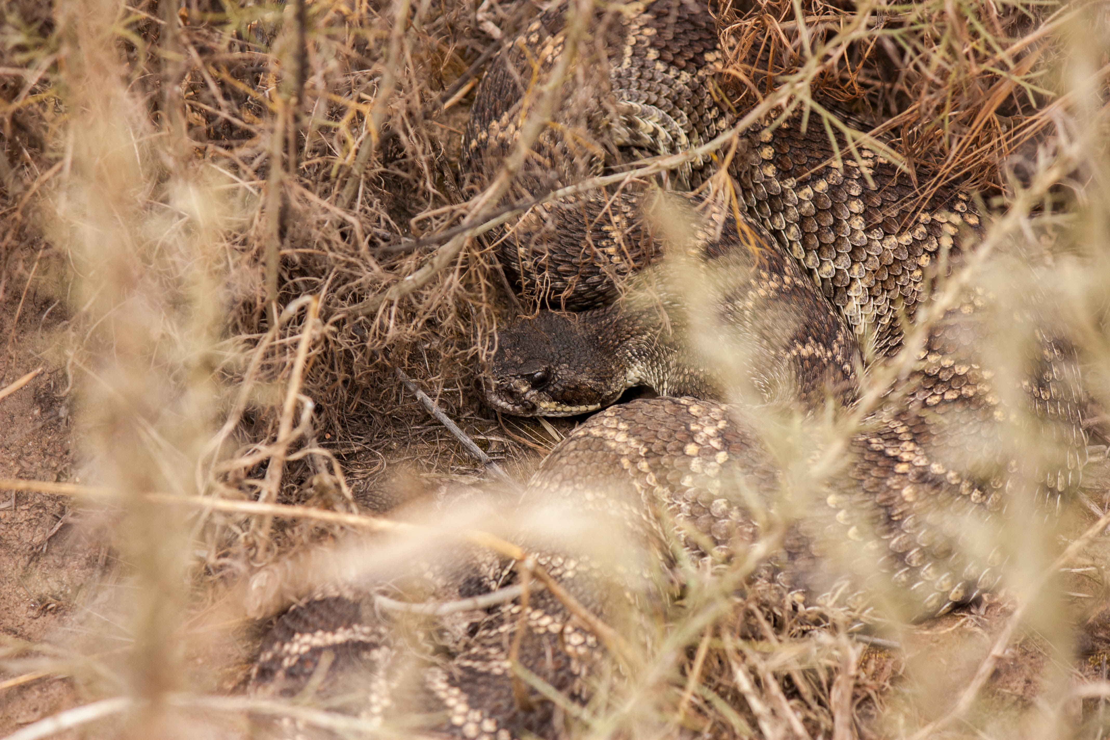 This snake is an expert at camouflage
