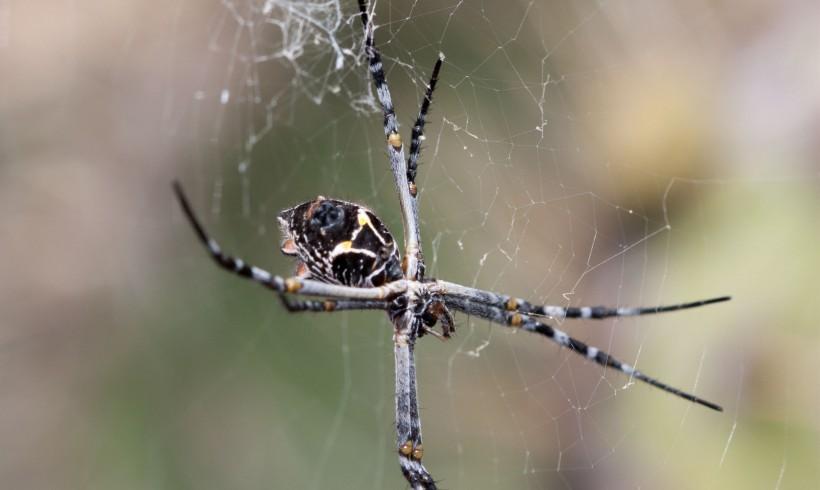 Creepy crawly spiders