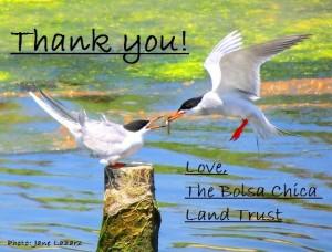 thank you birds
