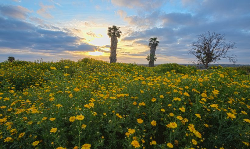 Why the Remaining Undeveloped Land on the Bolsa Chica Mesa is Worth Saving