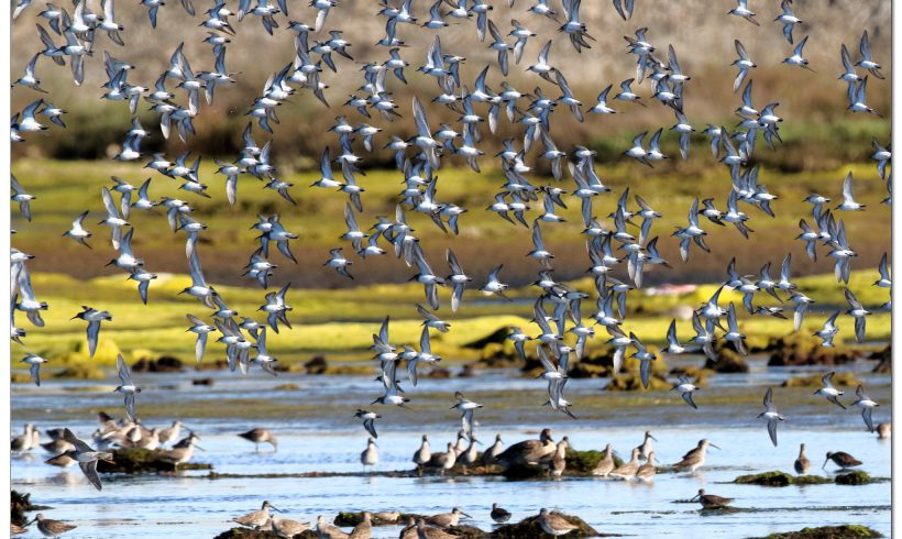 World Wetlands Day- The Importance of Bolsa Chica in the Global Effort to Protect Wetlands