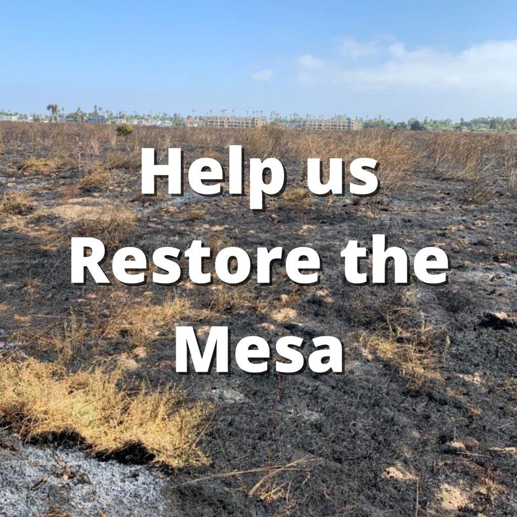 Help us Restore the Mesa