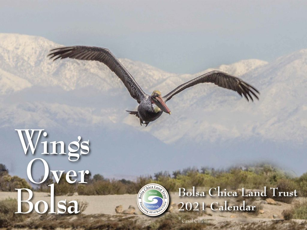 2021 Wings Over Bolsa Calendar, photo Carol Calkins